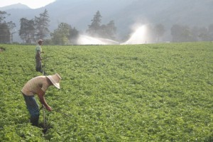 Fundaceta reactivará el sector agrícola, según el Presidente de la fundación