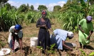 Haití exportará yuca, ñame, arroz y café a Venezuela a cambio de petróleo