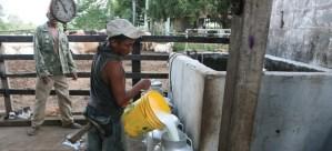 Cavilac advirtió caída de 65 por ciento en la demanda de productos lácteos