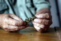 Expertos en México buscan combatir estigma de uso medicinal de cannabis
