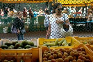 Canasta alimentaria de julio se ubicó en 1.649.306,75 bolívares