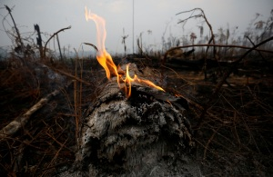 En cenizas te convertirás: Así se destruyó la vegetación en la Amazonía (FOTOS)