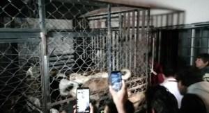 ¡Terrible! Vendedora de carne enchilada en México tenía decenas de perros refrigerados en casa