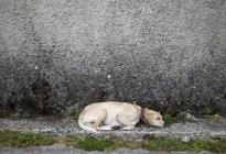 ¡Desgarrador! Su mascota preñada murió tras salvarles la vida del ataque letal de una serpiente (Fotos)