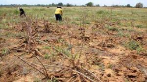 Fedeagro: Crisis del combustible genera caída histórica de 91 % en la superficie cultivada en seis años