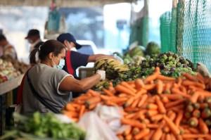 Agrónomos advierten del riesgo para los cultivos en Venezuela en medio de la pandemia