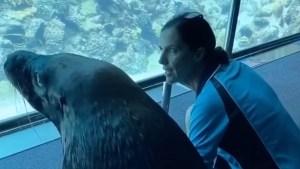 León marino dio un paseo por el acuario vacío durante la cuarentena por coronavirus (Video)