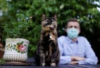 ¡Aaaww! Una gata sobrevivió al coronavirus en París