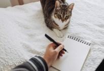 """Un gato que tiene una """"doble vida"""" regresó a su casa con espantosa nota en el collar (Foto)"""