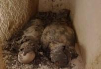 El descubrimiento de dos momias cubiertas de oro podría ser la clave para dar con la tumba de Cleopatra