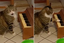 "VIRAL: Gato tocó un minipiano para ""protestar"" contra su dueña por comida (Video)"