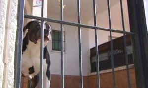 Murió niño que luchaba por su vida luego de que perros le arrancaran los genitales
