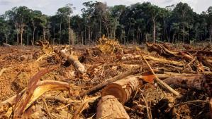 Aumenta la deforestación por las constantes fallas en el suministro de electricidad y gas doméstico