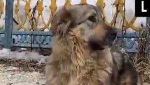 Rescate en Rusia: Niños salvaron a un perro de morir ahogado bajo capas de hielo (VIDEO)