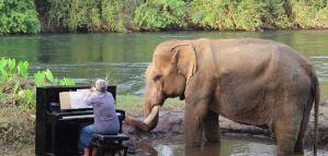 ¡Emotivo! Un elefante rescatado goza de la sonata de Beethoven en Tailandia (Video)