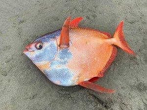 El curioso pez gigante que apareció en EEUU e intriga a los científicos (FOTOS)