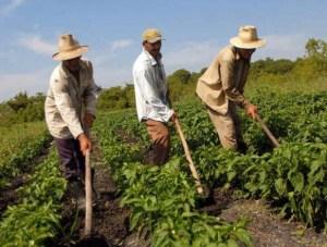 Fedeagro: En Venezuela la pobreza en zonas rurales ronda el 95%